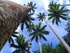 palm-trees-de-baixo-pra-cima.jpg